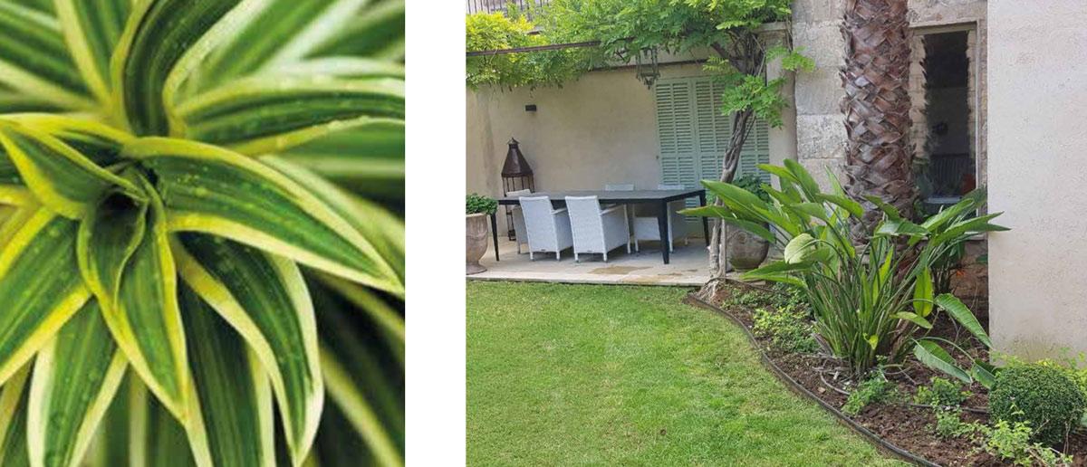 diseño jardines mallorca