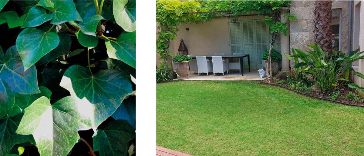 empresa mantenimiento jardines mallorca