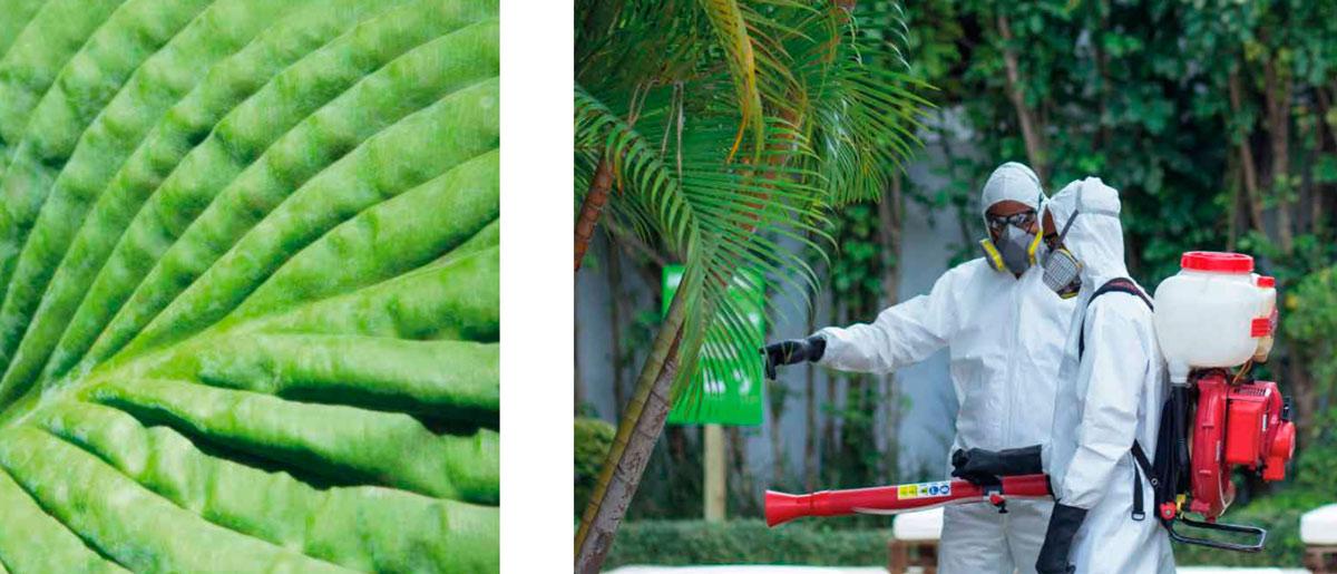 certificado ropo control de plagas en mallorca