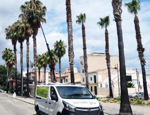 Reflexiones sobre la poda en Mallorca